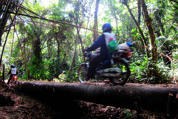 Motorcycles crossing a log bridge in the jungle outside Ndedu