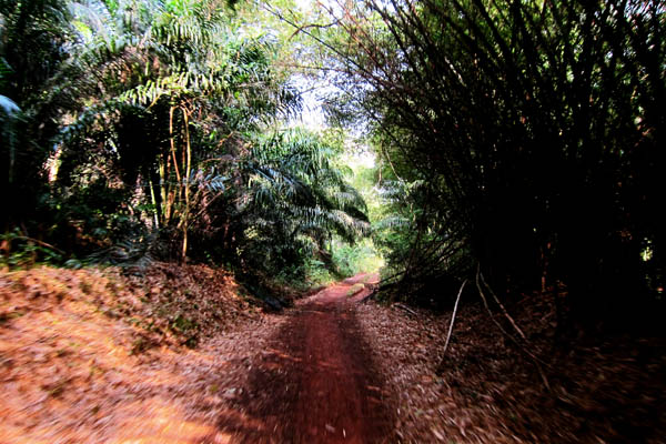 Motorcycling through the jungle south of Dungu, DR Congo