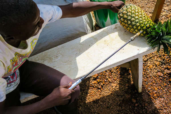 Spraying a pineapple with 0.5% chlorine solution