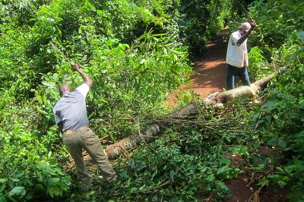 Guy and Eric bushwhacking in Ouaka, Central African Republic