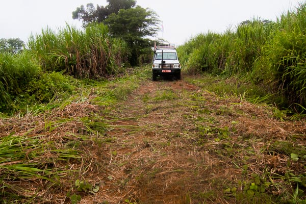 Tall grass cleared by daily workers at the north end of Pont Boungou, outside Grimari, Central African Republic