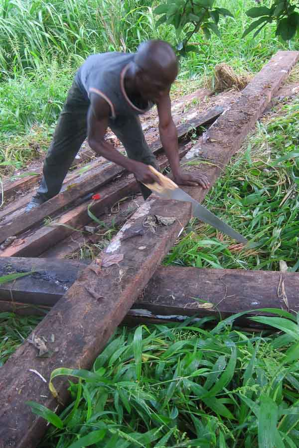Sawing thick timbers for bridge supports
