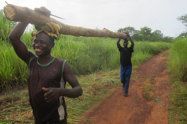 Two men carry a log for bridge repair near Grimari, Central African Republic
