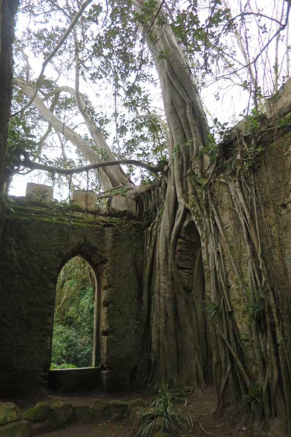 Tree roots overgrowing a mock ruin at the Park and Palace of Monserrate, Sintra