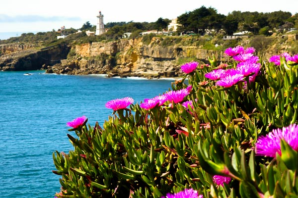Ice plant in the foreground, lighthouse in the background, at Cascais