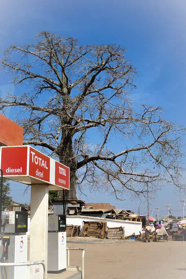 Baobab tree on the main drag in Kissidougou
