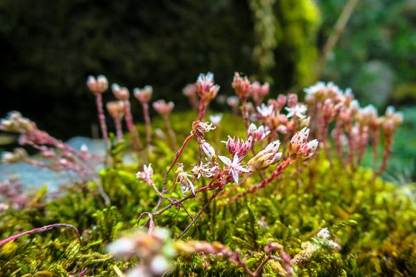 Moss in Guimarães