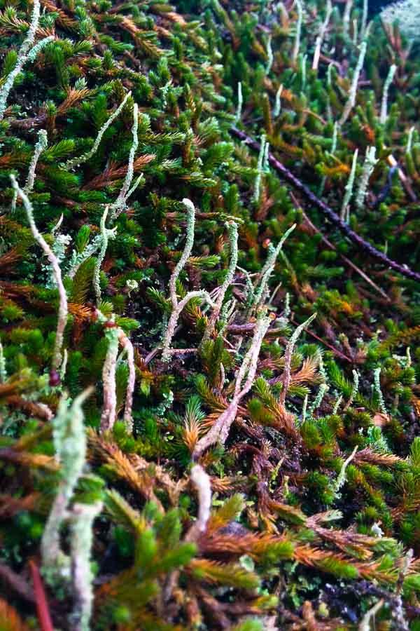 Moss on Bowen Island
