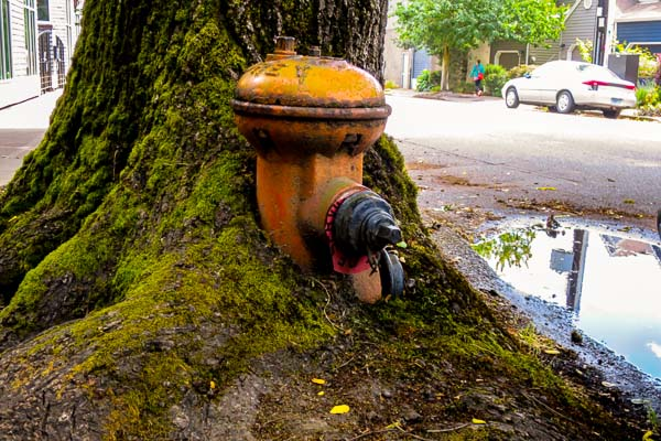 Old fire hydrant in Portland, Oregon